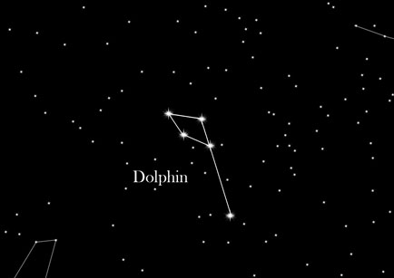 Constellation Dolphin