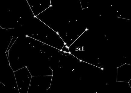 Constellation Bull